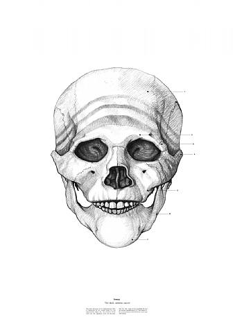 Halloween skull mother theresa by istvan laszlo