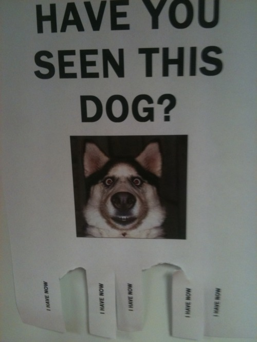 Flier dog via meme-meme