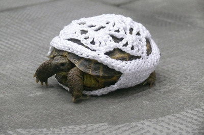 Pets turtle cozy via calvinscanadiancaveofcool